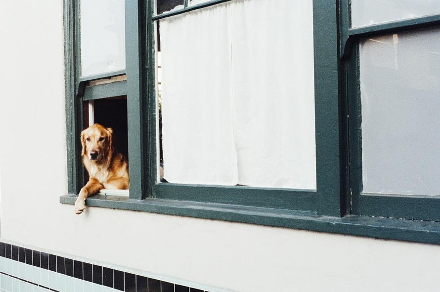 Hoteles y Spa para mascotas