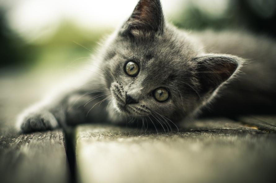 veterinarios gatos sabadell
