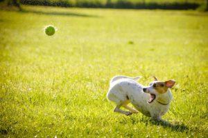 Cuida a tu perro del calor de la primavera