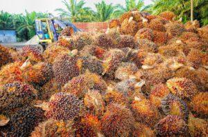 En qué productos encontramos aceite de palma