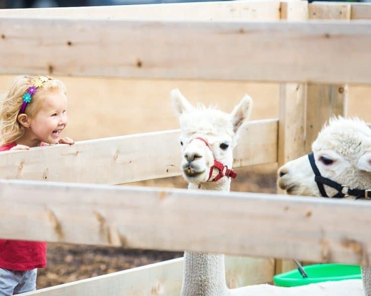 niña de visita en el zoo